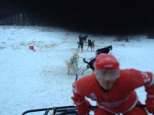 pavel on the sleigh